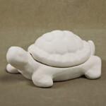 Schildkröten-Box / 25 Euro / DB18